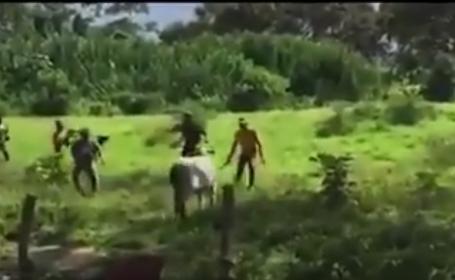 Scene de groază, în Venezuela. O mulțime înfometată ucide cu pietre o vacă. VIDEO