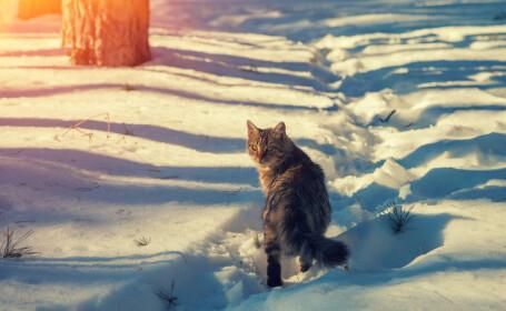 motan în zăpadă