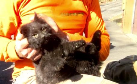 Operațiune de salvare a unei pisici care rămăsese blocată într-o țeavă de evacuare