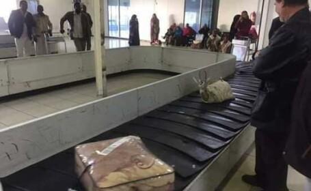 gazela la aeroport