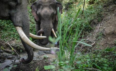 Elefanți fugăriți de săteni cu bombe incendiare. FOTO