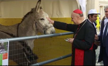 Animale sfintite de Sfantul Anton
