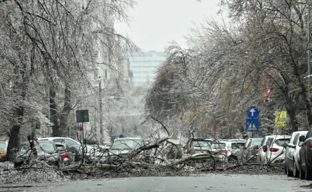 Mașini, avariate din cauza copacilor căzuți pe străzile din București