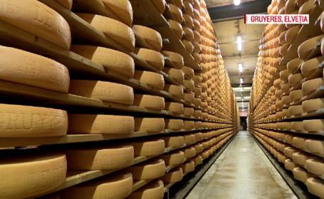 Locul secret unde se obține cea mai cerută brânză din Elveţia