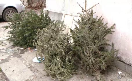 Ce se întâmplă cu brazii de Crăciun aruncați de români la gunoi după sărbători