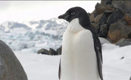 O bucată uriașă din calota polară, pe cale să se desprindă. Previziuni crunte pentru mediu