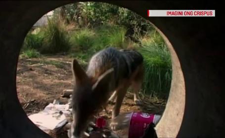 Animalele neobișnute care apar tot mai des în România. \