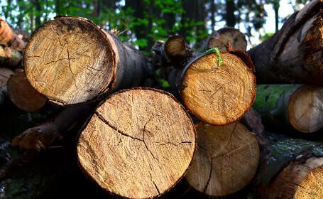 Copaci tăiați