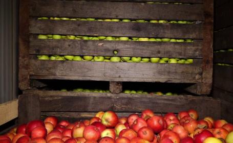 România are prea multe mere. În magazine se caută cele de import, iar producătorii încep să le arunce