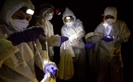 Oamenii de știință din Wuhan recunosc că au fost mușcați de lilieci infectați cu Covid