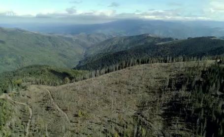 SUMAL, platforma menită să descurajeze mafia pădurilor, va fi îmbunătățită de la finalul lunii