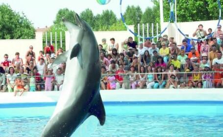 O mare de lacrimi! A murit delfinul Mark!