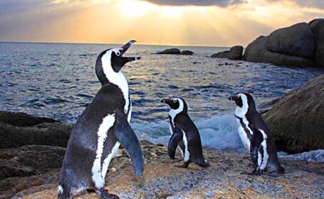 Pinguinii africani si pasarile flamingo, la un pas de disparitie