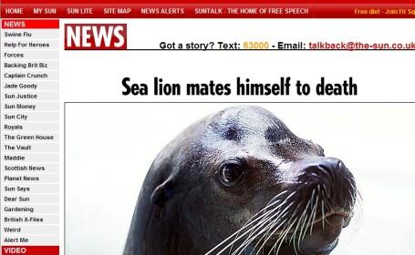 Un leu de mare s-a imperecheat pana la moarte!
