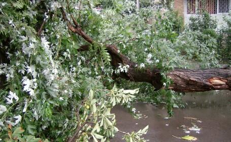 Romania, maturata de furtuni: culturi inundate, copaci cazuti si zeci de localitati fara curent