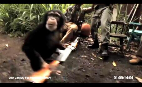 maimuta cu mitraliera