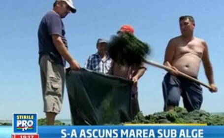 Algele provoaca scandal la Mamaia. Muncitorii, acuzati ca au curatat doar plajele de fite