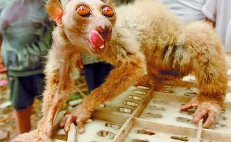 Maimuta extraterestru