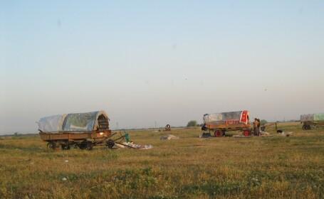 tabere nomazi timisoara