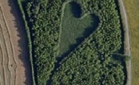 Inima din stejari
