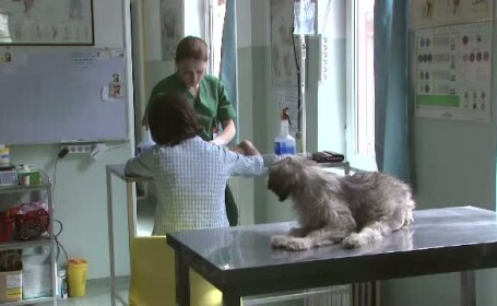 Freidorf: prima zona unde se opreste astazi cabinetul ambulant de sterilizare a cainilor