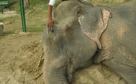 Elefantul Raju, care a plans cand a fost salvat, este in sfarsit fericit, in libertate: \