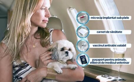 Companiile aeriene iti accepta animalul preferat la bord. Taxele si conditiile in care patrupedul scapa de cala avionului
