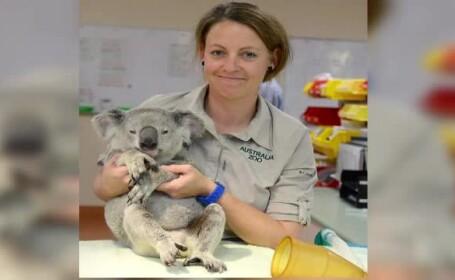 Un pui de urs koala, lovit de o masina, s-a prins de bara din spate a \