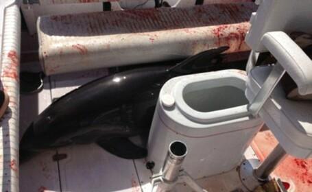 Un delfin a transformat barca unei familii din California intr-o baie de sange, dupa ce a sarit si i-a rupt picioarele femeii