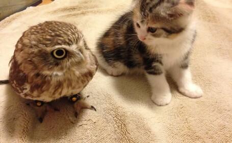Neobisnuita prietenie dintre o pasare si un pisoi. Povestea lui Fuku-chan, cucuveaua trista dintr-o cafenea din Japonia