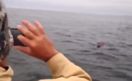 Descoperire uluitoare facuta de pescarii rusi in largul marii. \