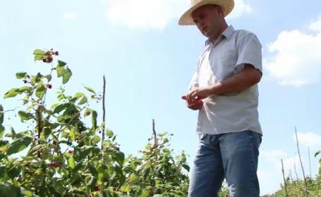 A renuntat la jobul dintr-o multinationala si si-a facut propria plantatie cu agrise. Ce profit scoate la hectar