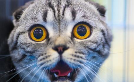 Una dintre cele mai mari tari din lume a declarat razboi pisicilor. \