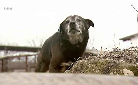 Caz socant in Judetul Alba. O femeie de 76 de ani a fost omorata de cainii din curte