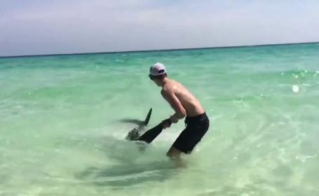 rechin Florida - stiri