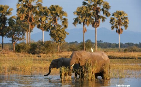 elefanti in Malawi