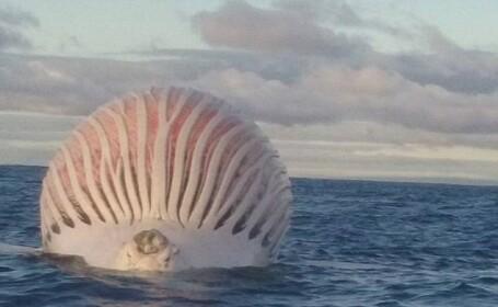 Un pescar din Australia a vazut in ocean un \