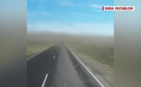 Invazie de lacuste filmata in Rusia. Autoritatile au decretat stare de urgenta