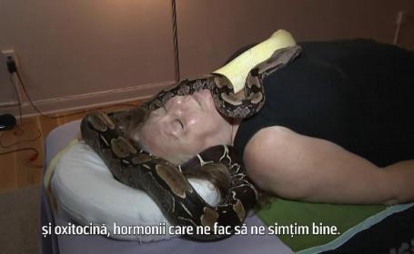 Beneficiile masajului cu șerpi boa. Cât de sigur este