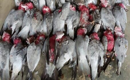 Doua sute de păsări, găsite moarte în același loc. Care ar putea fi cauza