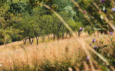 Un bărbat din Sălaj a murit în timp ce culegea mere. Ce insectă l-a ucis