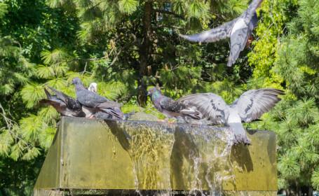 porumbei care se racoresc pe o fantana din Bucuresti