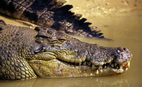 O fetiță de doi ani, ucisă de crocodilii crescuți de tatăl său. Reacția polițiștilor