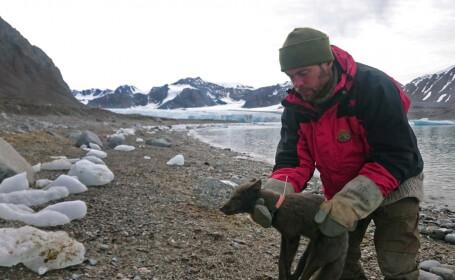 Călătoria unei vulpi polare i-a lăsat fără cuvinte pe oamenii de ştiinţă - 7