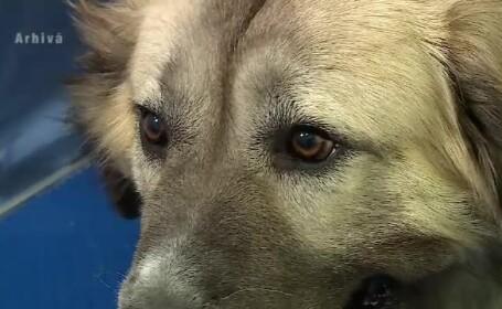 Bărbat sfâşiat de câini, când era la muncă. De ce nu i s-a făcut vaccin antirabic