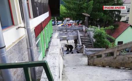 Situaţie periculoasă la Băile Tuşnad. Momentul în care un urs intră într-un restaurant