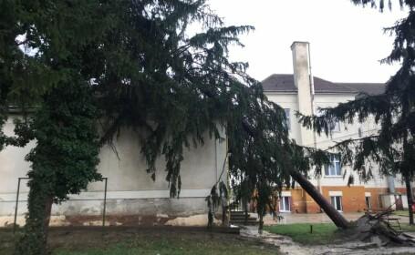 Furtună puternică în Arad. Un brad a căzut pe acoperișul Spitalului Județean