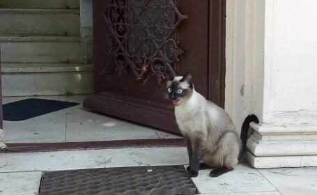 pisica in fata usii
