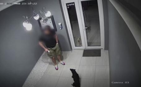 Gest de neînțeles, surprins de camerele de supraveghere din Timișoara. Cum a fost furat un câine