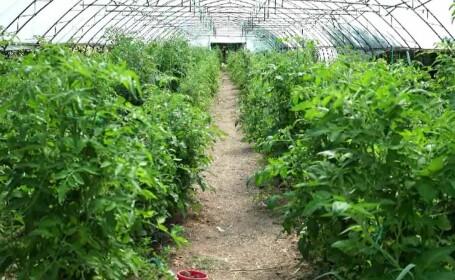 Asociaţiile agricole, soluția pentru fermele de mici dimensiuni. Cum sunt sprijinite de stat